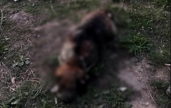 Policja poszukuje sprawcy brutalnego zabójstwa psa