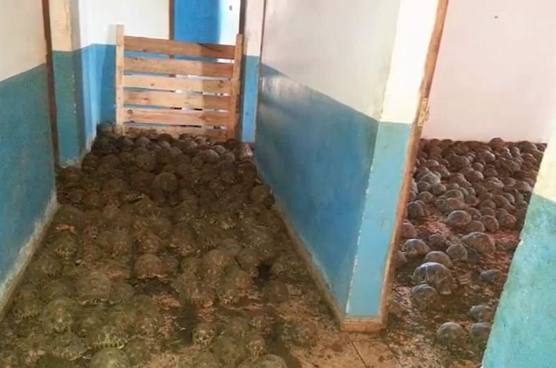 Żółwie znalezione w posesji na Madagaskarze