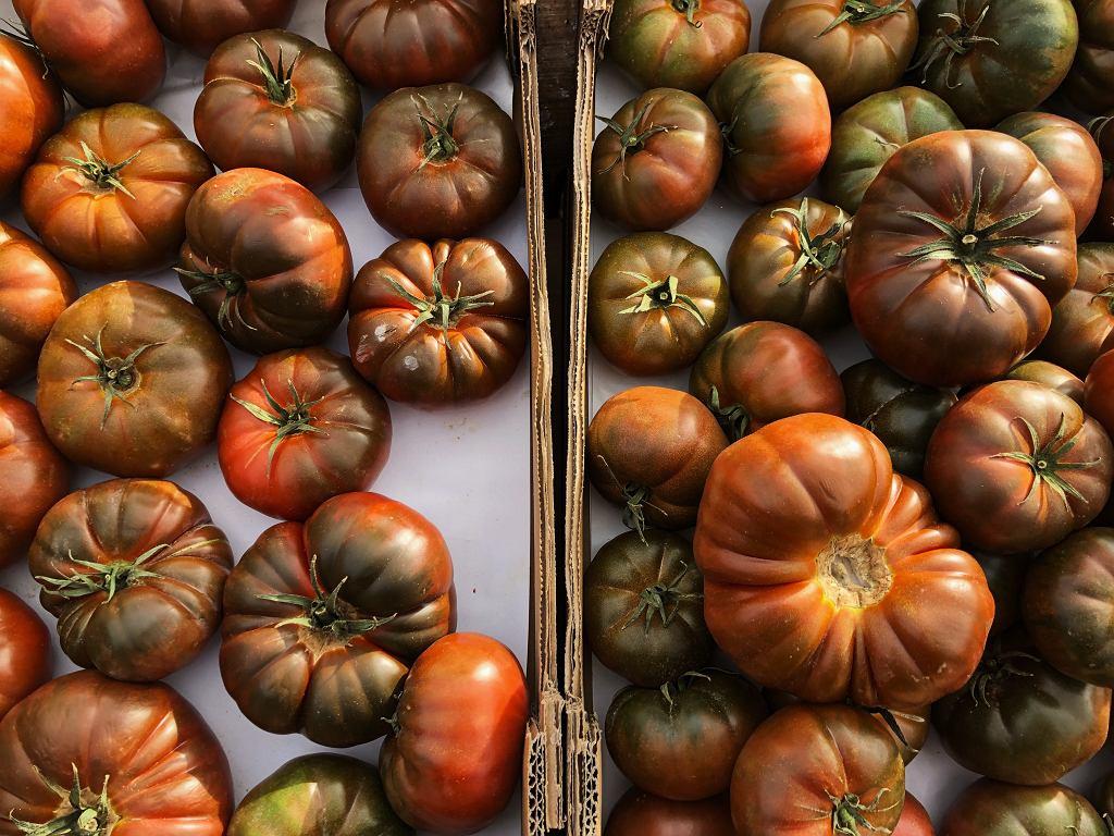Wyhodowane w Hiszpanii pomidory czekoladowe (pomidory kumato) zawierają w swoim miąższu więcej cukrów prostych niż standardowy pomidor, stąd bierze się ich zaskakująca słodycz