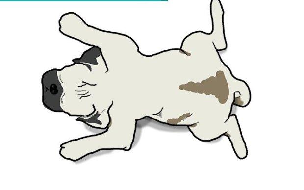 Pozycje, w których śpią psy i ich znaczenie