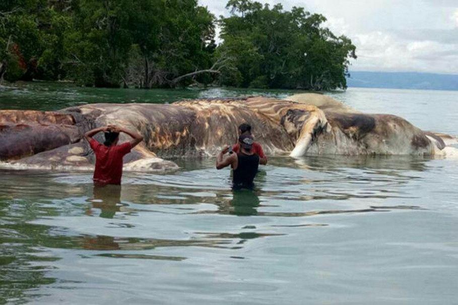 Gigantyczna kałamarnica przy brzegach indonezyjskiej wyspy Seram