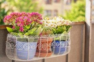 Kalendarz sadzenia roślin na balkonie