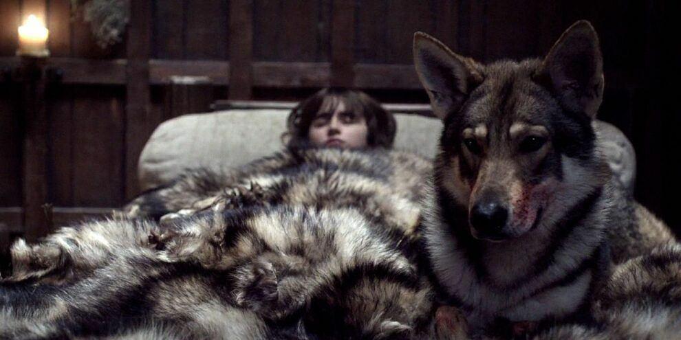 Nie żyje wilkor z 'Gry o tron'