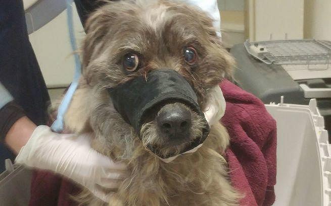 Pies uratowany z 'domu tortur' w Tarczynie