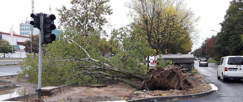 Wichura wyrywała drzewa z korzeniami. Na Lubelszczyźnie strażacy musieli interweniować ponad 300 razy