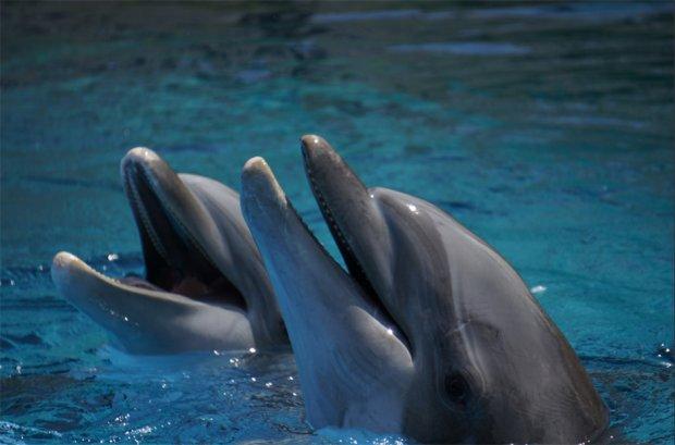 Delfiny najlepiej czują się w naturze /fot. brownpau Flickr CCo