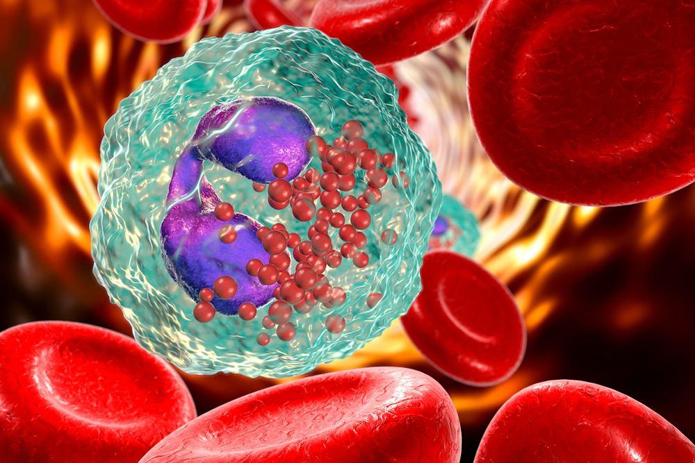 Eozynofile stanowią jeden z rodzajów leukocytów, czyli białych krwinek. Określane również eozynocytami i granulocytami kwasochłonnymi, produkowane są w szpiku kostnym.