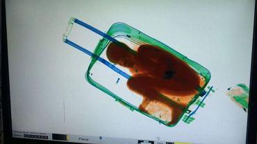 Chłopiec, którego kobieta przewoziła walizce przez granicę hiszpańsko-marokańską