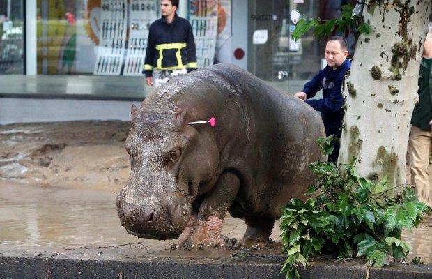 Zdjęcie numer 0 w galerii - Powódź po silnej ulewie w Tbilisi. Z zoo uciekły dzikie zwierzęta