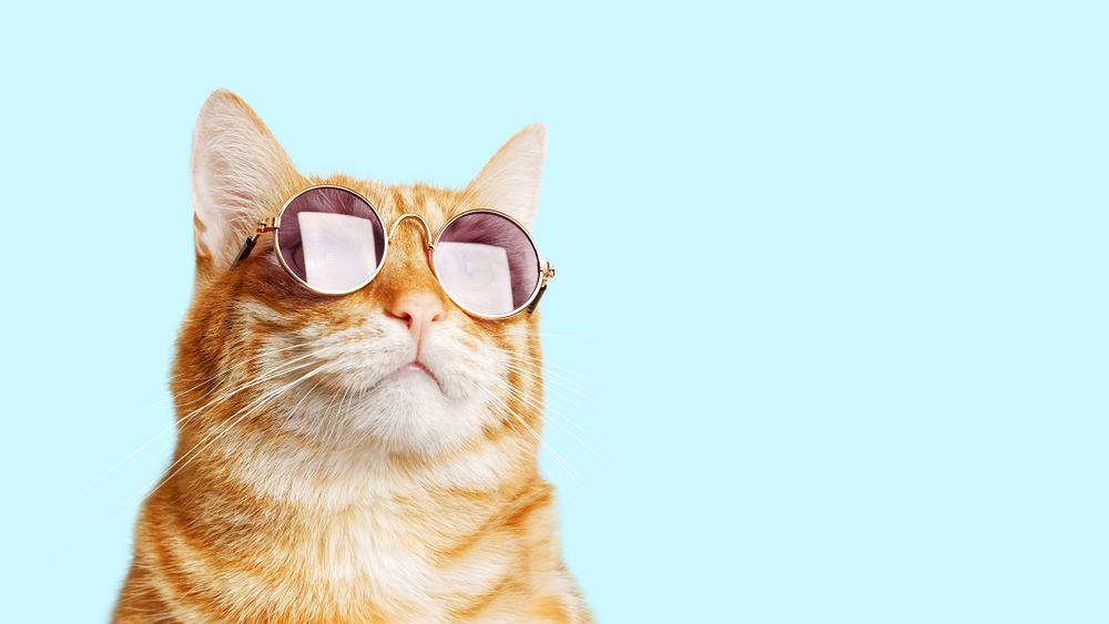 Jak widzi kot? Ze względu na budowę oka kot wyraźnie widzi przedmioty oddalone o 2-6 m. Zdjęcie ilustracyjne