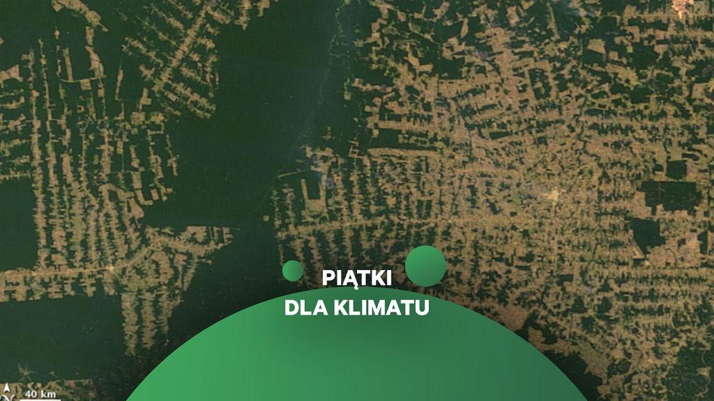 Wylesianie w Amazonii