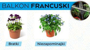 Większość sadzonek roślin śródziemnomorskich możemy bez problemu kupić w sklepach ogrodniczych. Nie są one ani szczególnie drogie, ani wymagające.