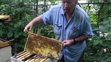 Znowu modne jest hodowanie pszczół, by mieć miód i inne produkty na własny użytek. Pytanie czy te pożyteczne owady mają szansę przetrwać w coraz bardziej skażonym środowisku