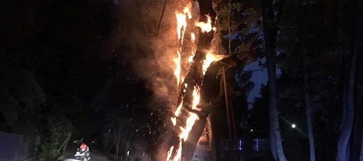 Pożar 600-letniego dębu Mieszko I na Ursynowie.