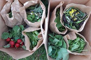 Krakowska Farma Miejska dostarcza warzywne paczki i zaprasza do wspólnych upraw