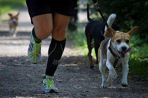 Bieganie z psem, jak zacząć i na co zwrócić uwagę?