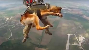 Pies skaczący ze spadochronem