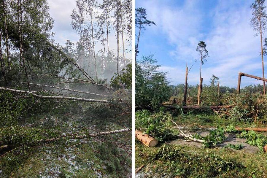Skutki burz i nawałnic w Borach Tucholskich