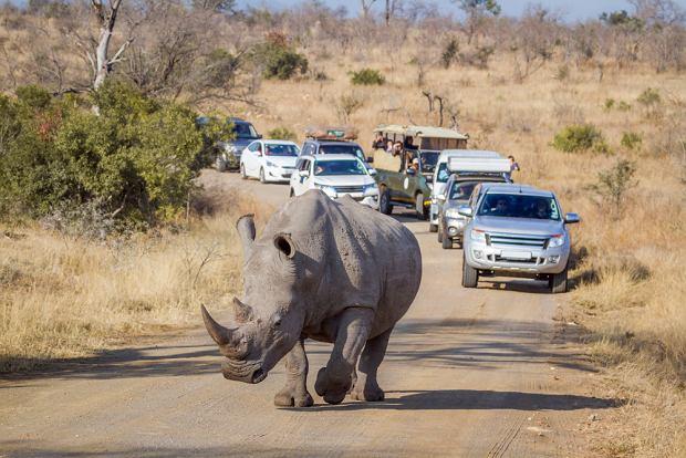 Najciekawsze wycieczki z safari. Nie tylko w Afryce. Wybraliśmy dla was sześć propozycji