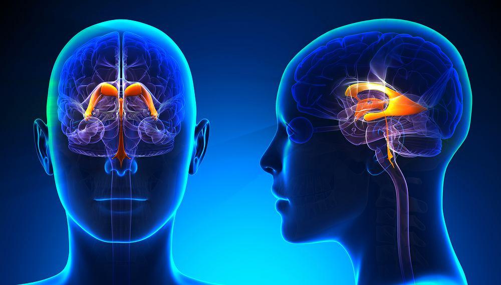 Układ komorowy mózgu