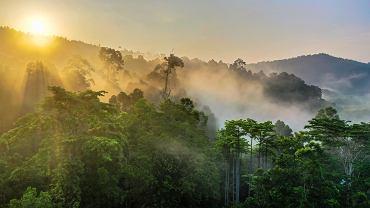 Już w 1989 r. naukowcy policzyli, że hektar lasu deszczowego ma wartość 6820 dol. Gdyby go wyciąć, to wartość drewna wyniosłaby 1000 dol., a gdyby go zamienić na pastwisko dla bydła, uzyskalibyśmy dochód w wysokości 148 dol.