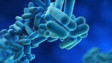 Choroba legionistów wywoływana jest bakterie, które bardzo często gnieżdżą się w urządzeniach klimatyzacyjnych