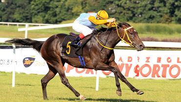 Szczepan Mazur wygrywa setny wyścig na klaczy Belmondina