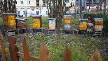 Wiosna w ogrodzie botanicznym UKW w Bydgoszczy