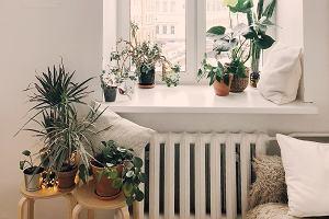 Rośliny do domu: TOP 5, które ozdobią i przy okazji oczyszczą pomieszczenia