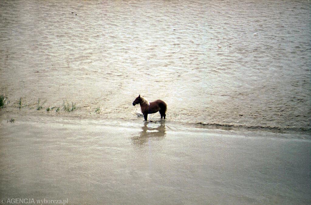 Okolice Raciborza podczas powodzi 1997.