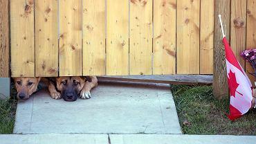 Psy zabitego w Ottawie żołnierza czekają na powrót swojego pana