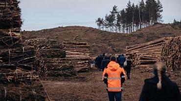Wycinka pod przekop Mierzei Wiślanej w Skowronkach, marzec 2019