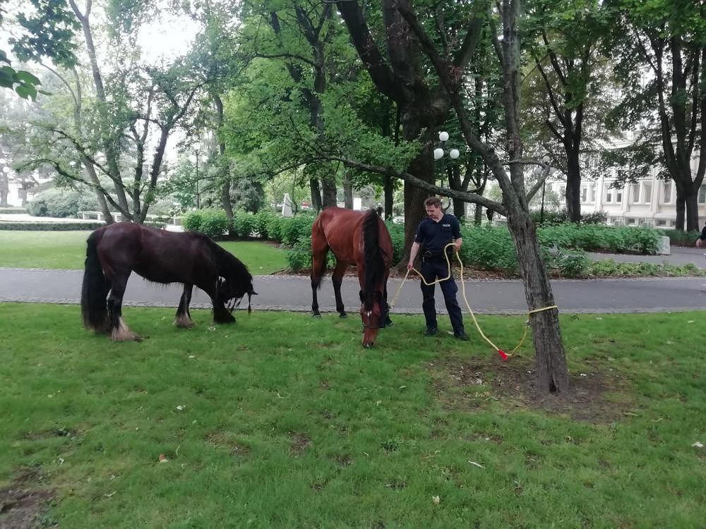 Konie galopowały po jednej z głównych ulic Krakowa. Policjantom udało się je złapać.
