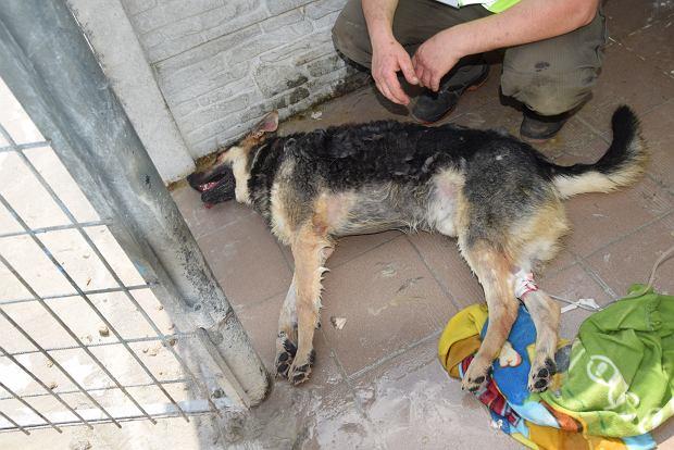 Zwierzęta uratowane ze schroniska w Radysach
