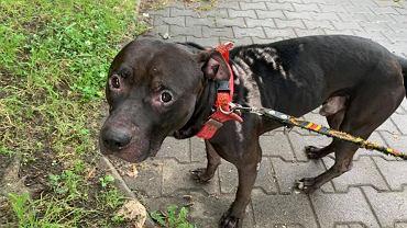 Pies Diego był polewany domestosem. Oprawca w ten sposób 'karał' swoją partnerkę