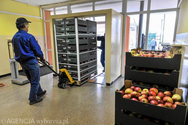 20 ton jabłek dla rzeszowskich uczniów
