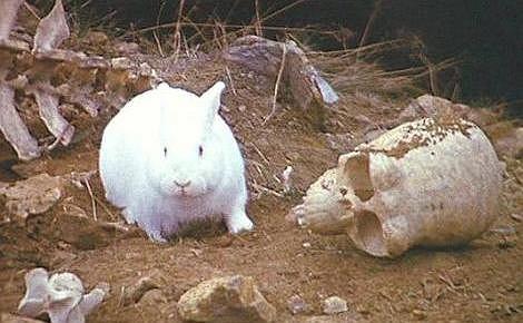 Zabójczy królik z filmu 'Monty Python i Święty Graal' (1975).