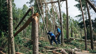 Drzewa w Borach Tucholskich połamane przez nawałnice