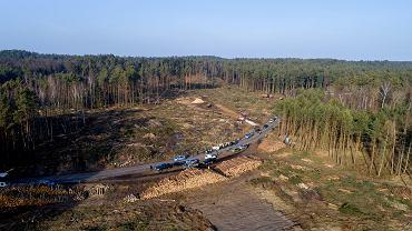 Wycinka drzew na Mierzei Wiślanej w Skowronkach