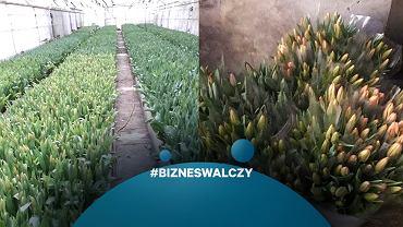Właściciel plantacji tulipanów poprosił o pomoc w kupowaniu kwiatów, odzew przerósł jego oczekiwania