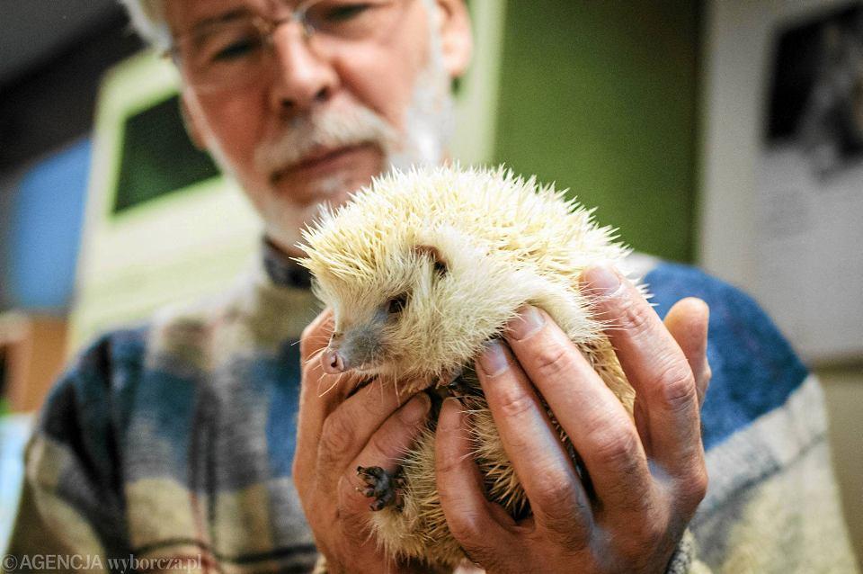 Zdjęcie numer 1 w galerii - Oto Pan Jerzy, który ratuje jeże. Poznajcie człowieka o wyjątkowym sercu