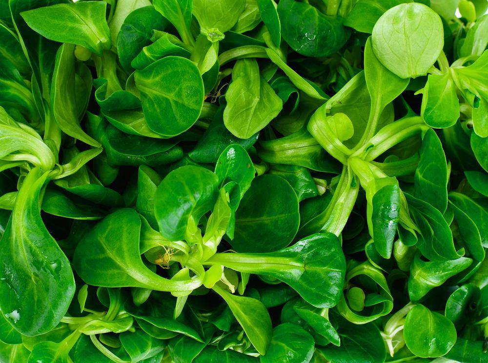 Roszponka: jednym z największych atutów tej sałaty jest wysoka zawartość beta karotenu.