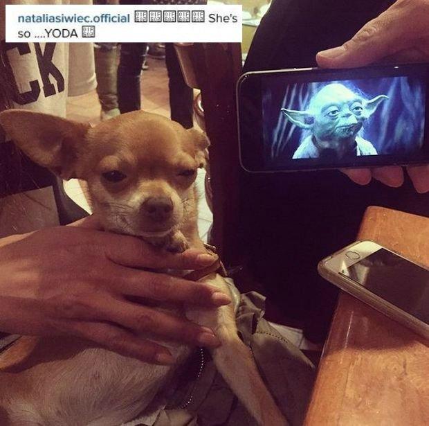 Pies Natalii Siwiec