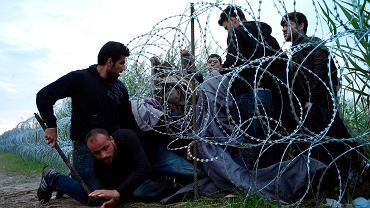 Syryjscy uchodźcy przedzierają się pod drutem kolczastym na granicy Serbii i Węgier