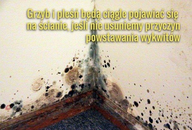 Grzyb na ścianie. Jak usunąć grzyb ze ścian. Cena, metody