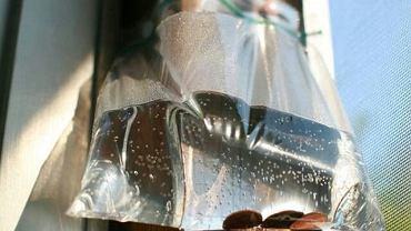 Dlaczego latem warto wywieszać na drzwiach woreczki z wodą? To świetny sposób na muchy