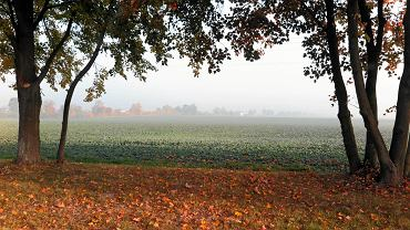 Jesień w Płocku i okolicach