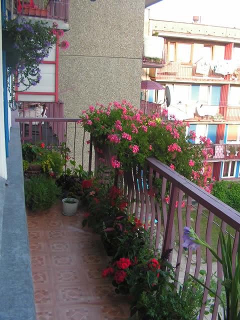 Kwiaty Na Balkon Forum Dyskusje Rozmowy